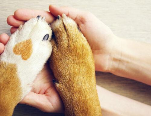 Verschwiegene Hundeversicherung: Versicherung zahlt drauf